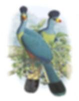 pinterest com - Copia - Copia.jpg