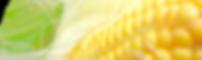 corn1.png