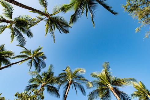 Island of Hawaii