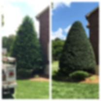 Tree Removal - Concord - Charlotte - Tree Service