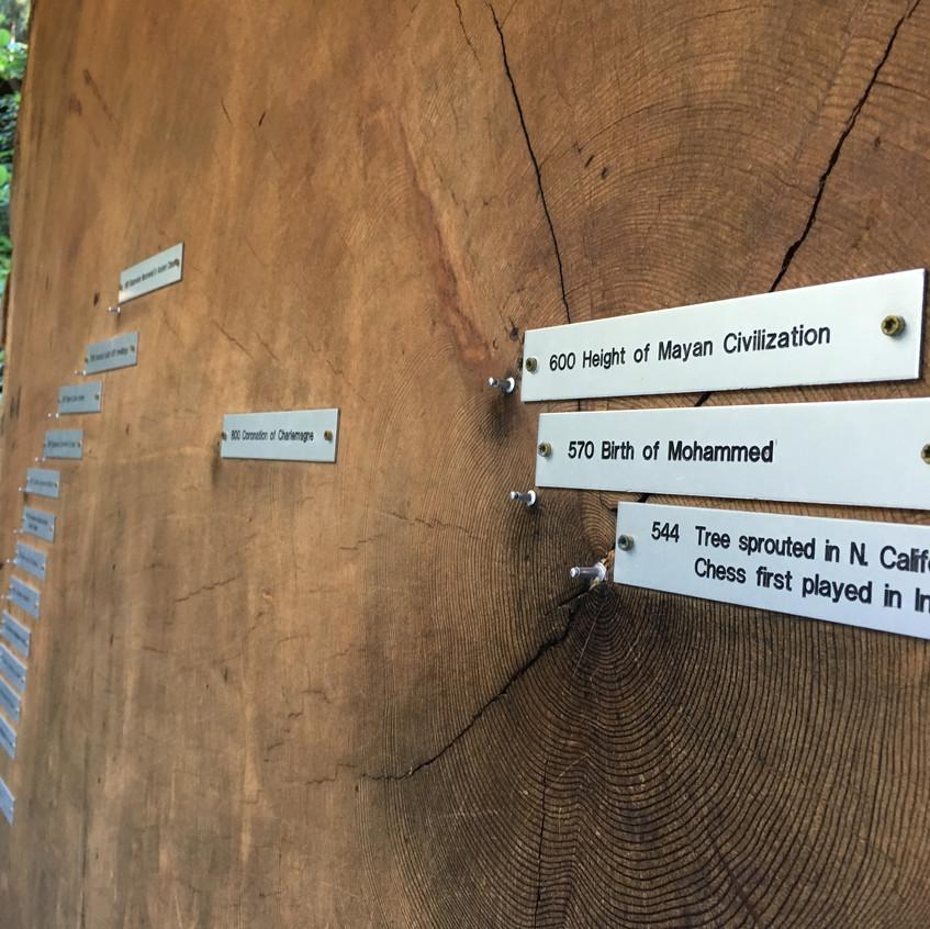 Redwood cross section
