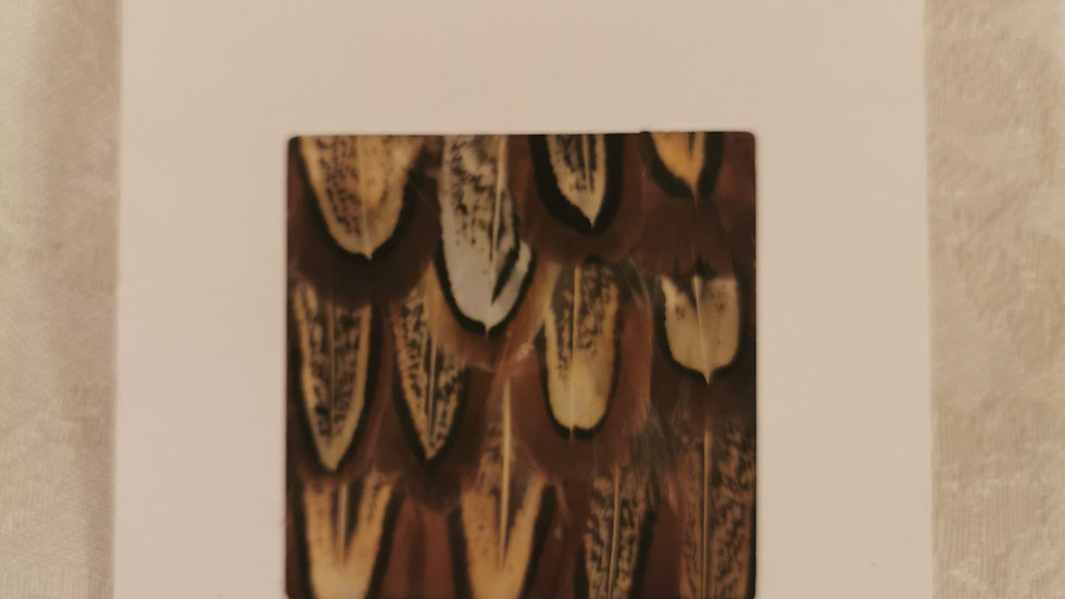 Feather Greetings Card
