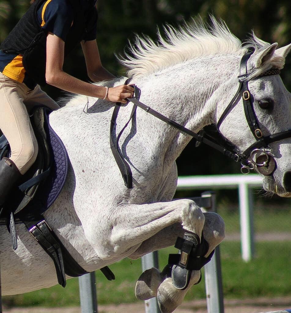 HORSE CU.jpg