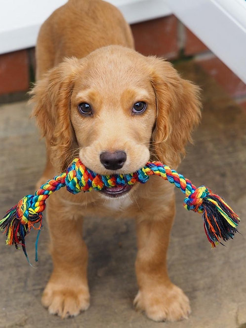 Multicoloured Rope Toys - Twisted Tugger