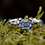 Thumbnail: CYLON SAPPHIRE SILVER RING WITH YELLOW GOLD DETAIL