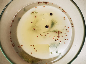 Fermented Sardines