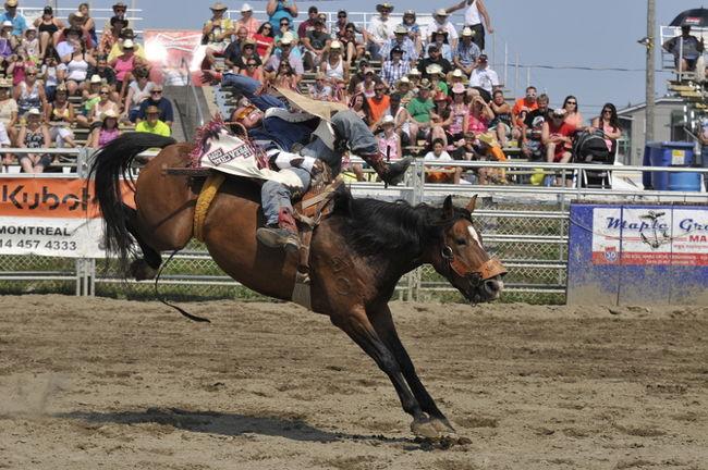 Monte des chevaux sans selle