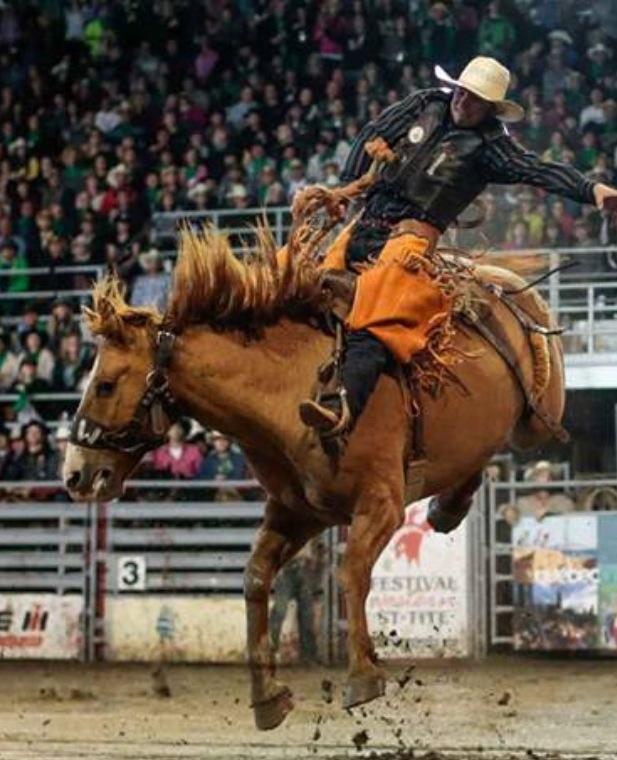 Monte des chevaux avec selle