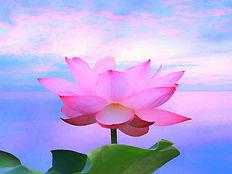 lotus_pink_160x120.jpg