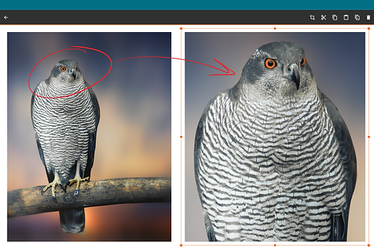 Copy, paste, resize, and markup images