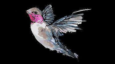 BIRD_03.png