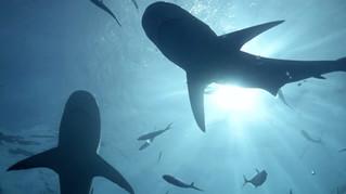 Huawei 'The Shark Dancer'