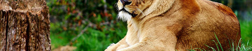 Zoo d Amneville ( Moselle )