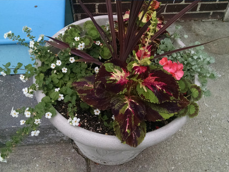 Planters of Abell