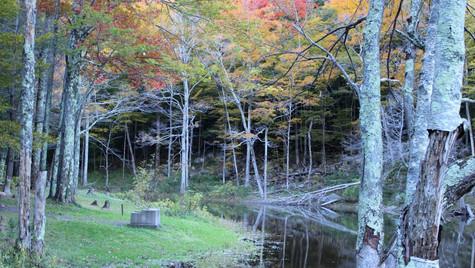 Late Autumn Pond