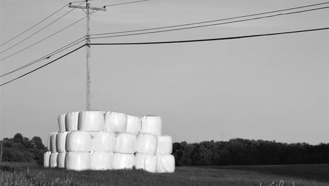Marshmallow Farm