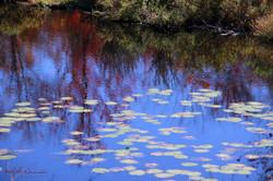 Autumn Lillies (Large)