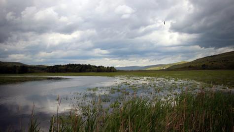 Bashakill Wetlands East