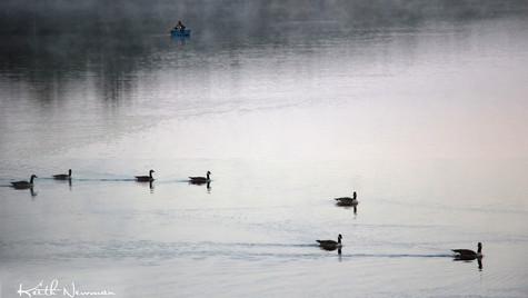 Fisherman's Geese