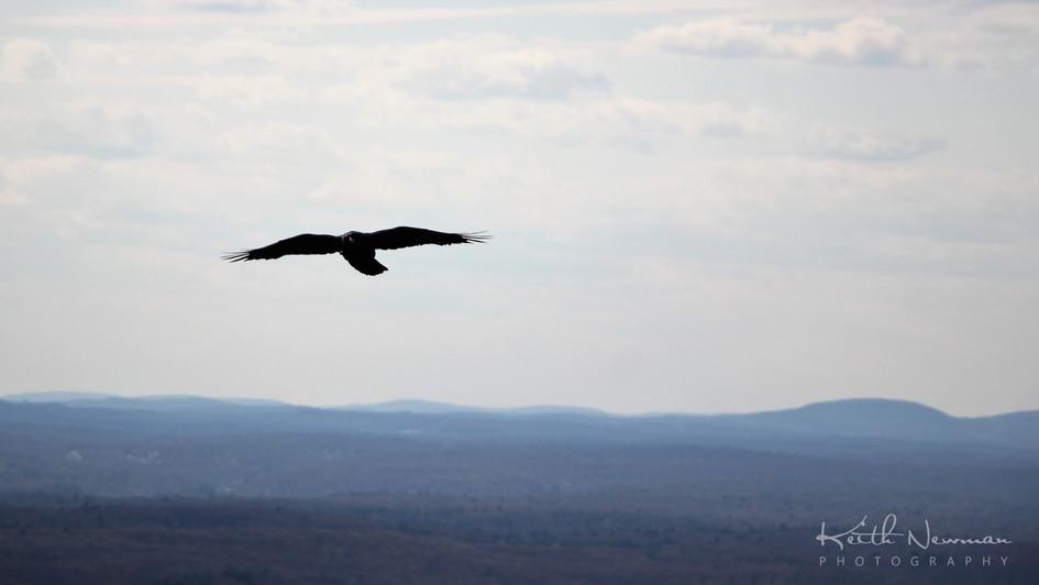 Raven of Bear Hill