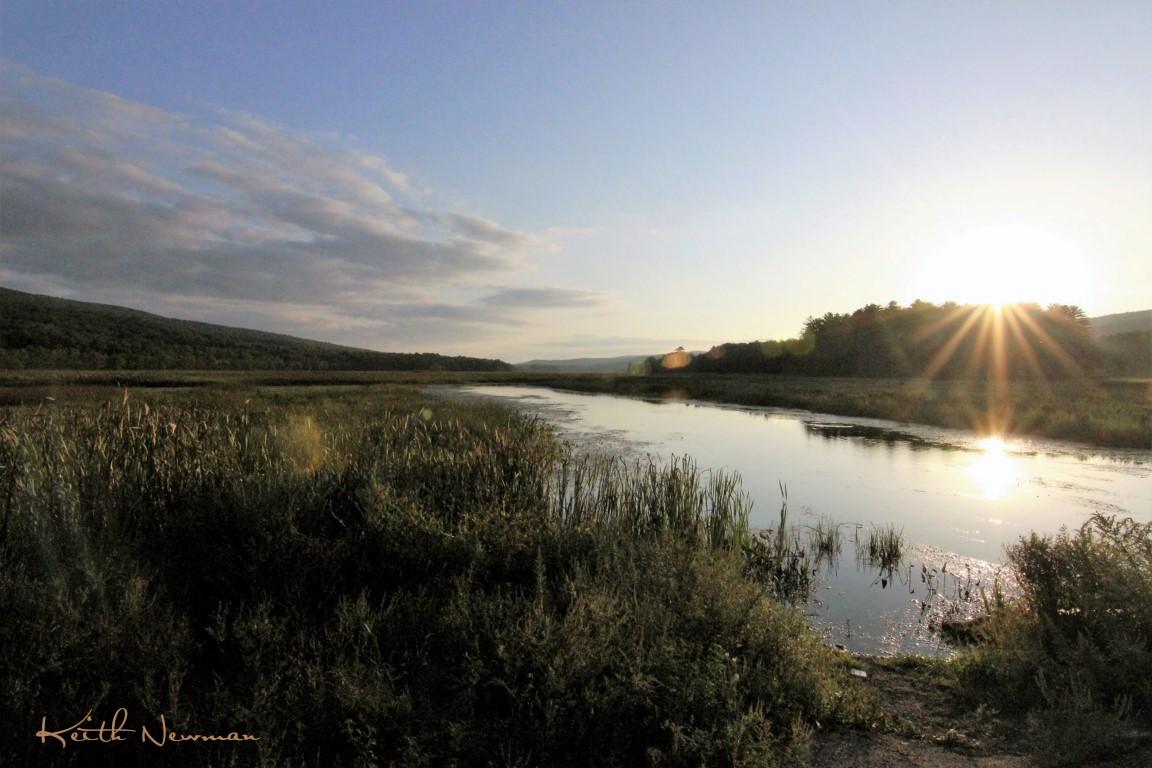 Bashakill Wetlands West