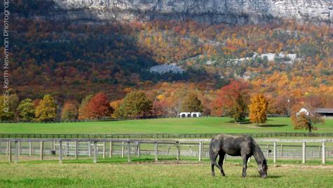 Minnewaska Horse