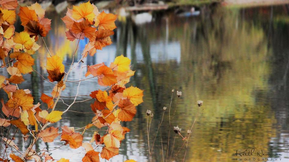 Leaf Lake
