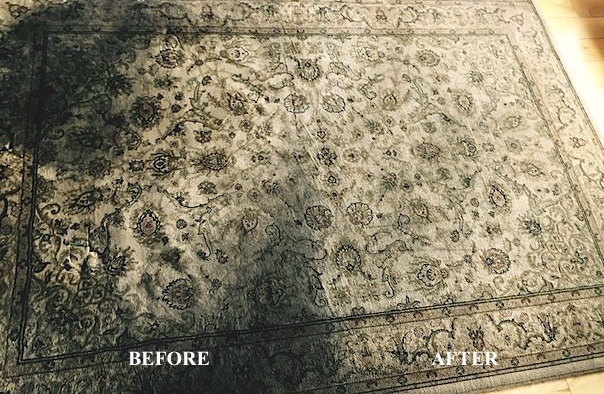 el pasos best area rug cleaning