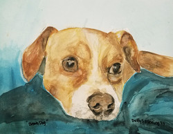Dog Portrait, Look at that Face!