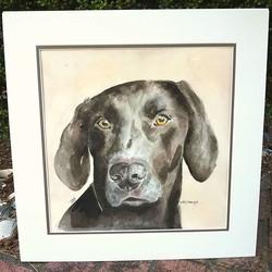 Pet Portrait Tuesday! Sweet Jax, firstbo