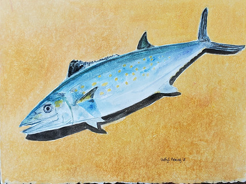 Atlantic Spanish Mackeral Watercolor