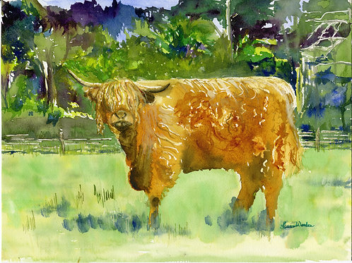 Kate's Scottish Cow - giclee