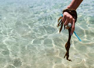 Loliware's algae-based plastic alternatives get $ 6 million seeds from environmentally aware inv