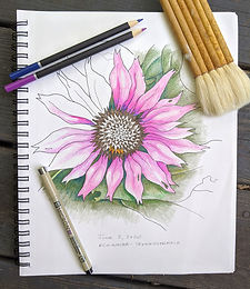 Virtual Botanical Drawing for Beginners with SoCo Arts Lab - Tuesday nights 6:30-7:30 pm, February 9, 16, 23 and March 2, 2021 Copy