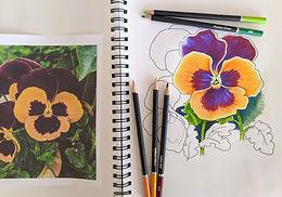 Virtual Botanical Drawing for Beginners through ArtFarm - 4 week course Tuesdays - starts November 17, 2020