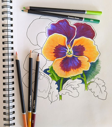 Pansies%20drawing%20with%20pencils_edite