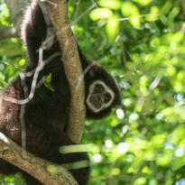 Il sont le plus souvent sur les branches à plusieurs mètres de hauteur
