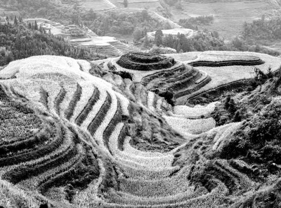 rizières en N&B-_ _+1.jpg