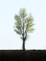 arbre aquarellisé