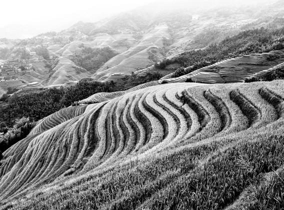 rizières en N&B-_ _+3.jpg
