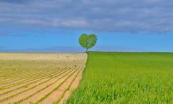 au coeur du paysage