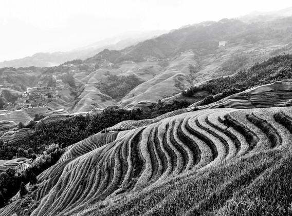 rizières en N&B-_ _+4.jpg