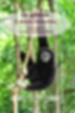 gibbon visuel ex N&B.jpeg