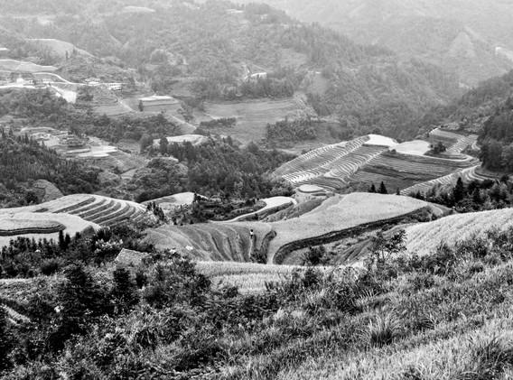 rizières en N&B-_ _+6.jpg