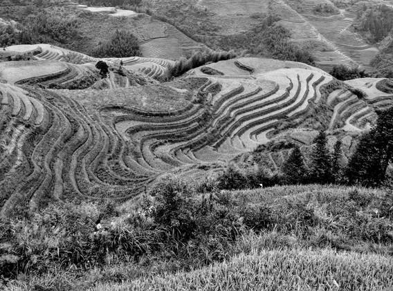 rizières en N&B-_ _+5.jpg