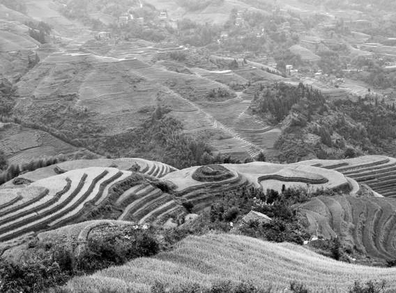 rizières en N&B-_ _11.jpg