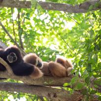Le couple fait la sieste dans l'ombre des arbres (la photo a été éclaircie mais souvent ils sont totalement dans l'ombre)