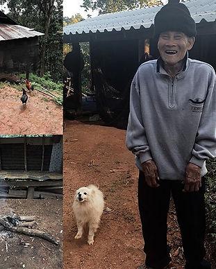A farm of MTT x Kad Kokoa in Mae Tang is