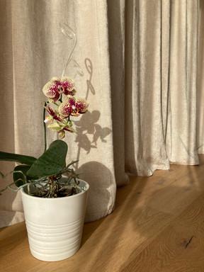 taupe - závěs s dubovou podlahou.jpg