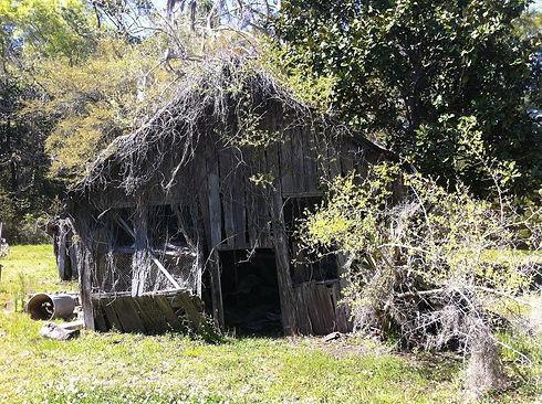 old-barn-in-the-back.jpg